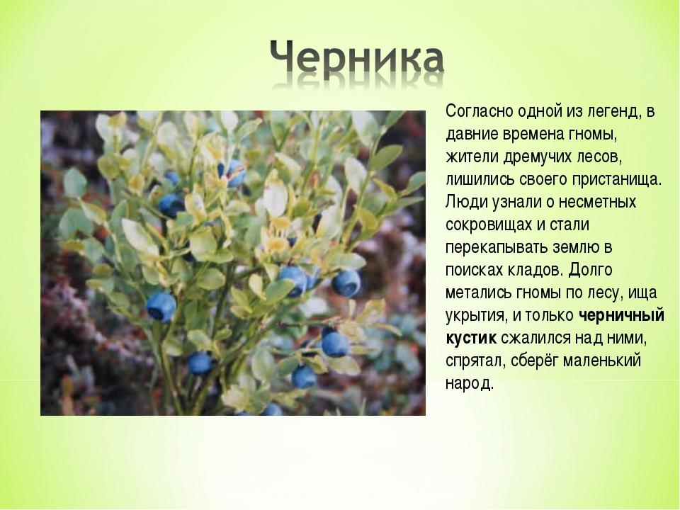 Согласно одной из легенд, в давние времена гномы, жители дремучих лесов, лиши...