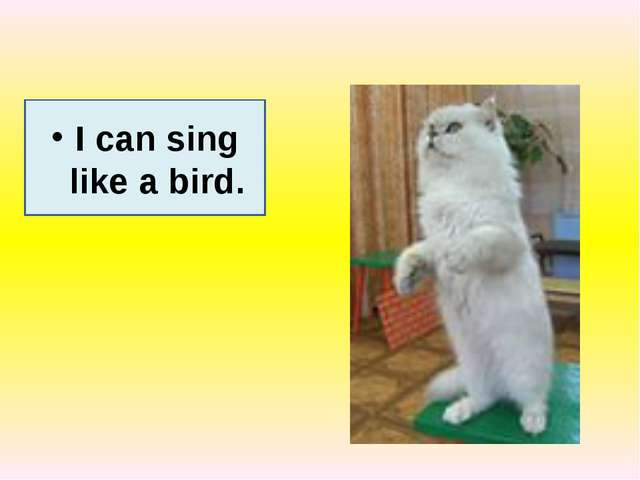 I can sing like a bird.