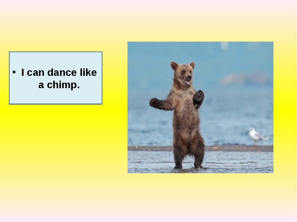 I can dance like a chimp.