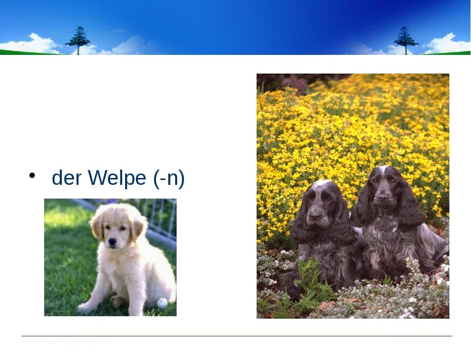 der Welpe (-n)
