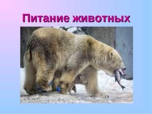 Питание животных