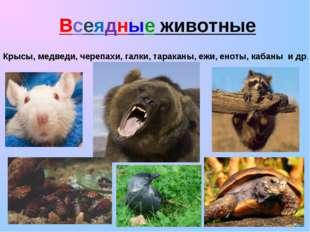 Всеядные животные Крысы, медведи, черепахи, галки, тараканы, ежи, еноты, каба