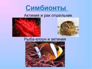 Симбионты Актиния и рак отшельник Рыба-клоун и актиния