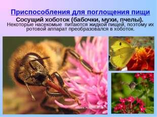 Приспособления для поглощения пищи Сосущий хоботок (бабочки, мухи, пчелы). Не