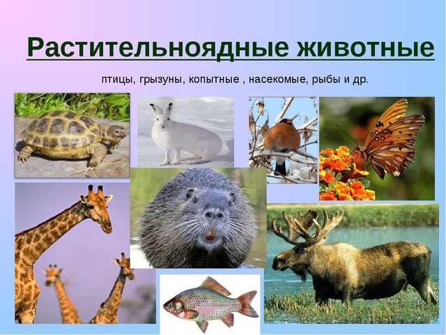 Растительноядные животные птицы, грызуны, копытные , насекомые, рыбы и др.