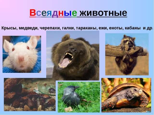 Всеядные животные Крысы, медведи, черепахи, галки, тараканы, ежи, еноты, каба...