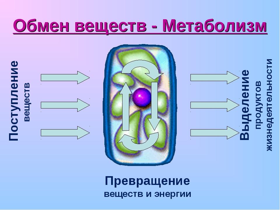Обмен веществ - Метаболизм