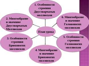 План урока 1. Особенности строения Двустворчатых моллюсков 3. Особенности стр