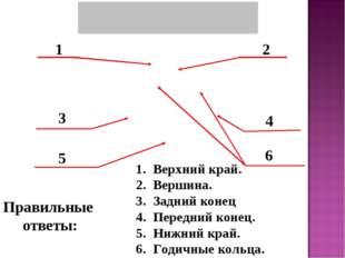 1 2 3 4 5 6 Правильные ответы: Верхний край. Вершина. Задний конец Передний к