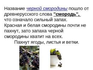 """Название черной смородины пошло от древнерусского слова """"смородь"""", что означа"""
