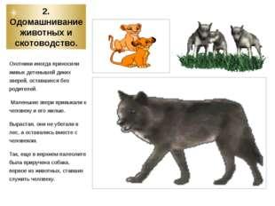 2. Одомашнивание животных и скотоводство. Охотники иногда приносили живых дет
