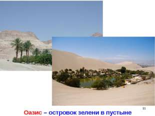 * Оазис – островок зелени в пустыне