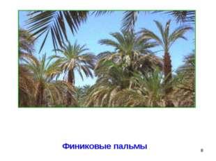 * Финиковые пальмы