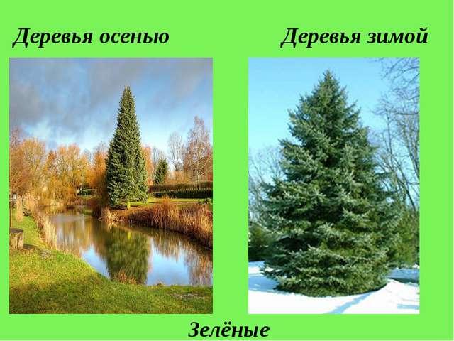 Деревья осенью Деревья зимой Зелёные