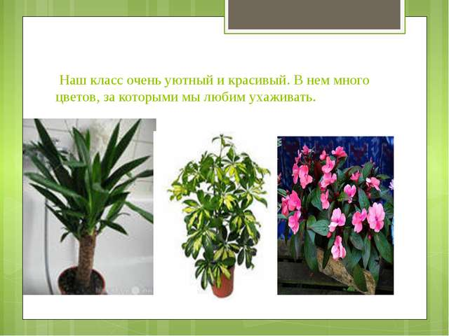 Наш класс очень уютный и красивый. В нем много цветов, за которыми мы любим...