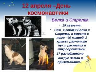 12 апреля –День космонавтики Белка и Стрелка 19 августа 1960 г.собаки Белка и