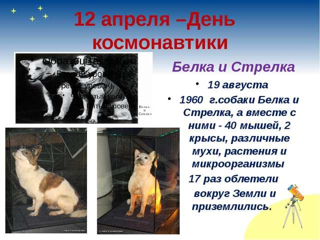 12 апреля –День космонавтики Белка и Стрелка 19 августа 1960 г.собаки Белка и...
