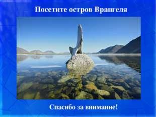 Посетите остров Врангеля Спасибо за внимание!