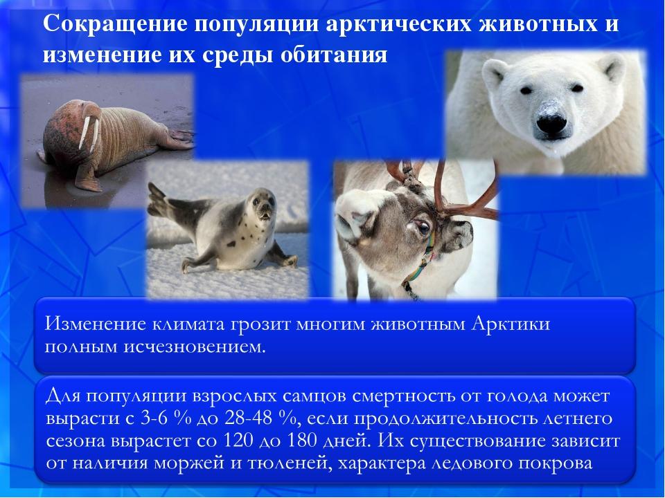 Сокращение популяции арктических животных и изменение их среды обитания