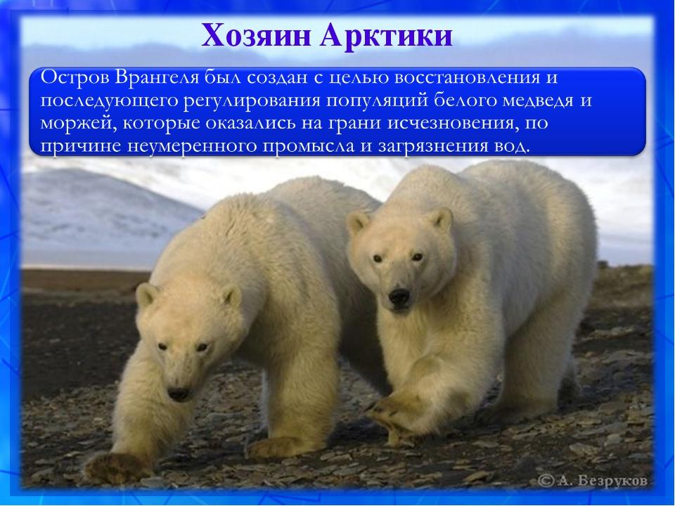 Хозяин Арктики