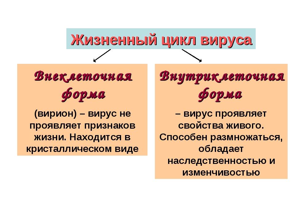 Жизненный цикл вируса Внеклеточная форма (вирион) – вирус не проявляет призна...