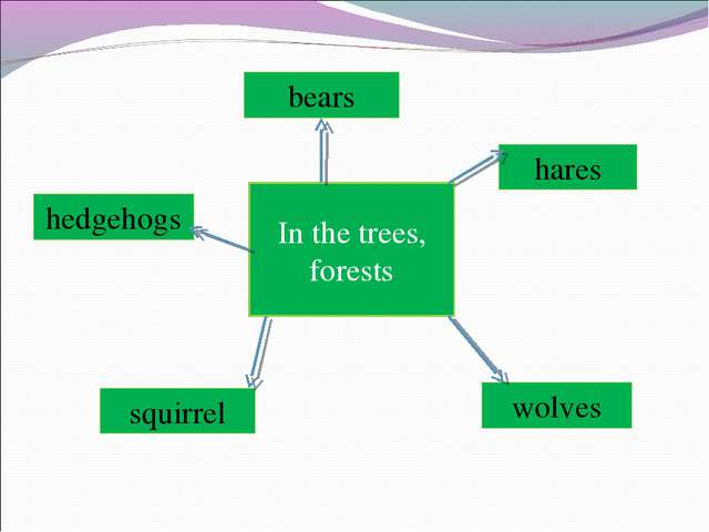 In the trees, forests hares wolves bears hedgehogs squirrel