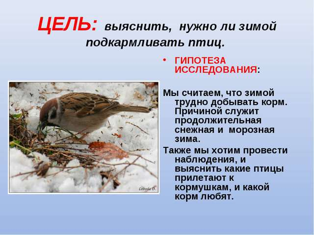 ЦЕЛЬ: выяснить, нужно ли зимой подкармливать птиц.  ГИПОТЕЗА ИССЛЕДОВАНИЯ:...