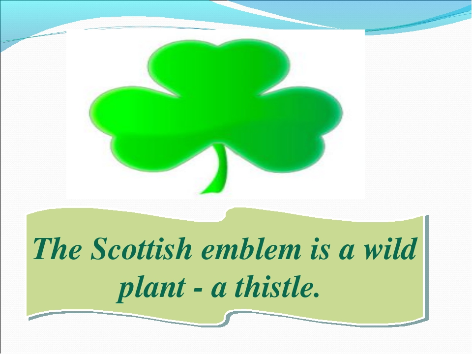 The Scottish emblem is a wild plant - a thistle.