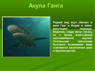 Редкий вид акул обитает в реке Ганг в Индии и имеет репутацию людоеда. Впроче