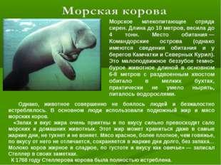 Морское млекопитающее отряда сирен. Длина до 10 метров, весила до 4 тонн. Мес