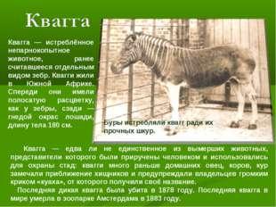 Квагга — истреблённое непарнокопытное животное, ранее считавшееся отдельным в