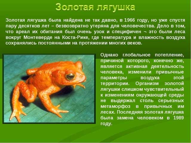 Золотая лягушка была найдена не так давно, в 1966 году, но уже спустя пару де...