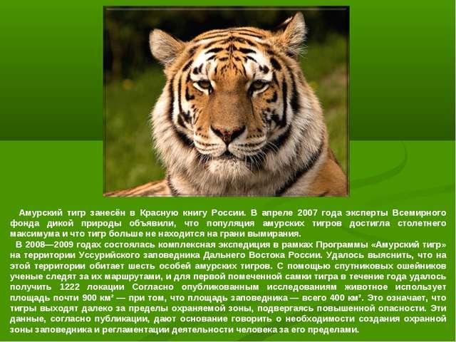Амурский тигр занесён в Красную книгу России. В апреле 2007 года эксперты Вс...