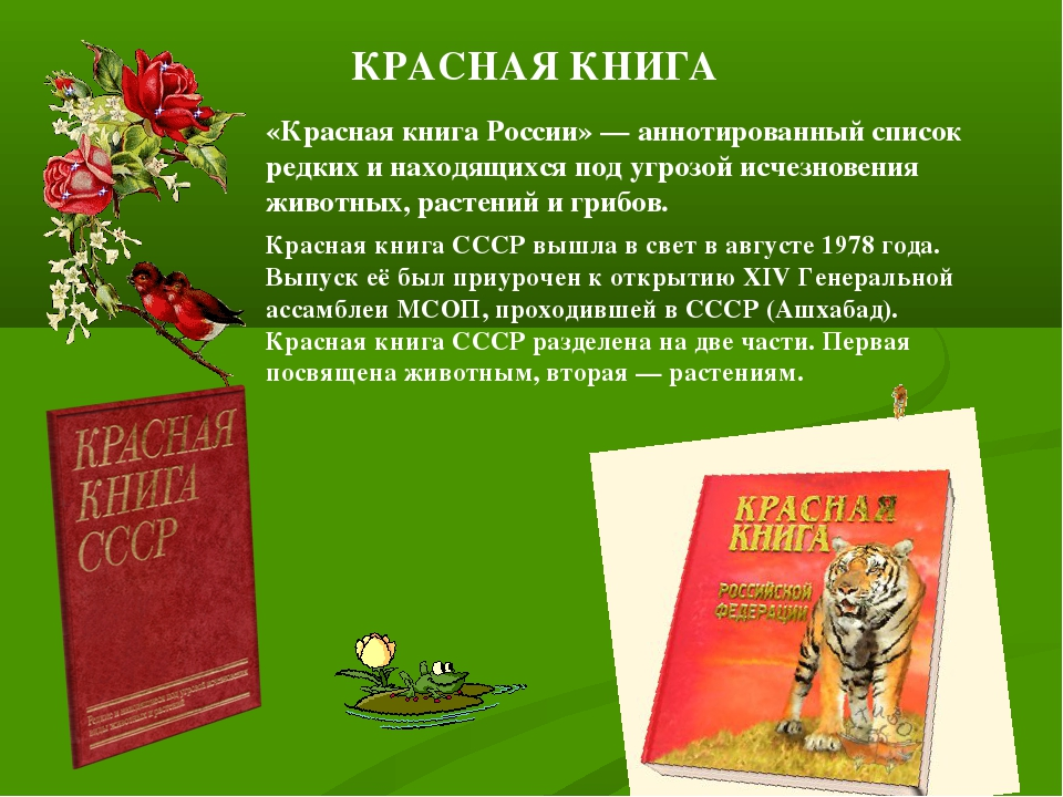 Как сделать красную книгу про животных