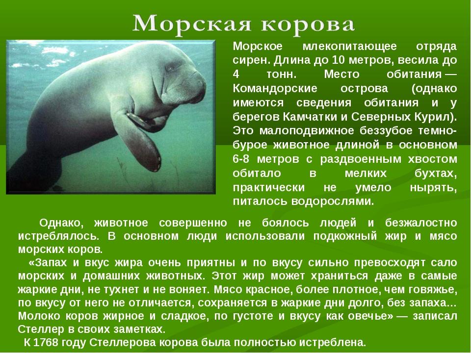 Морское млекопитающее отряда сирен. Длина до 10 метров, весила до 4 тонн. Мес...