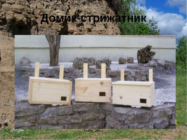 Домик-стрижатник Очёр, 2014 Очёр, 2014