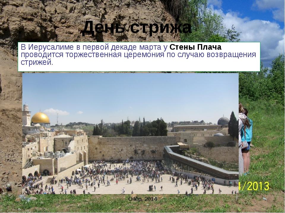 День стрижа В Иерусалиме в первой декаде марта у Стены Плача проводится торже...