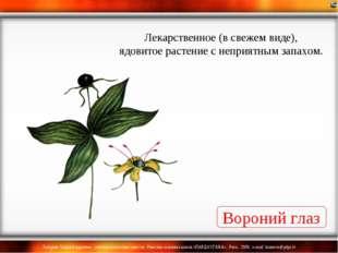 Вороний глаз Лекарственное (в свежем виде), ядовитое растение с неприятным за