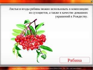 Рябина Листья и ягоды рябины можно использовать в композициях из сухоцветов,