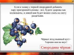 Смородина чёрная Чёрных ягод пышный куст - Хороши они на вкус! Если к тазику