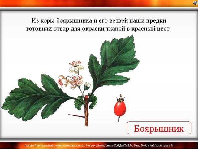 Боярышник Из коры боярышника и его ветвей наши предки готовили отвар для окра...