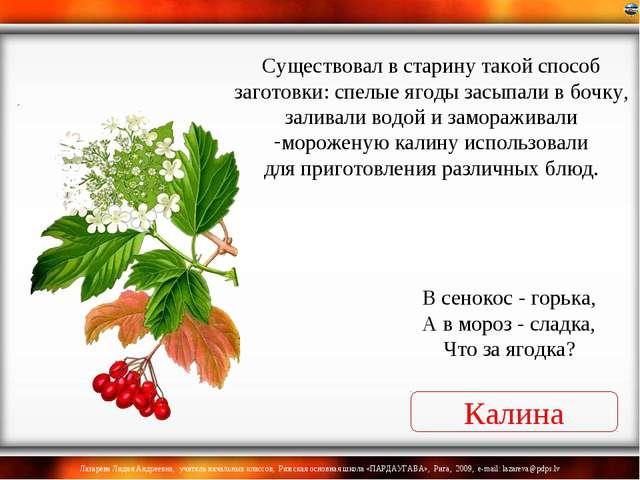 Калина В сенокос - горька, А в мороз - сладка, Что за ягодка? Существовал в с...