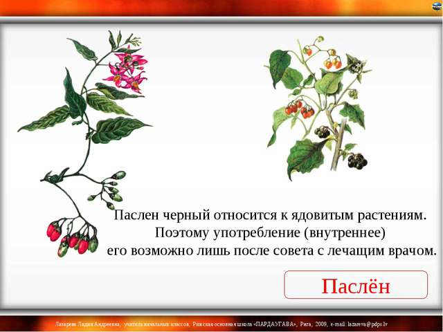 Паслен черный относится к ядовитым растениям. Поэтому употребление (внутренне...