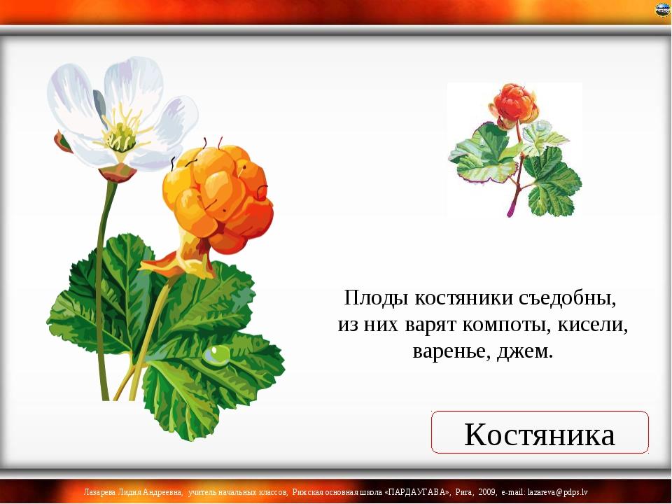 Костяника Плоды костяники съедобны, из них варят компоты, кисели, варенье, дж...