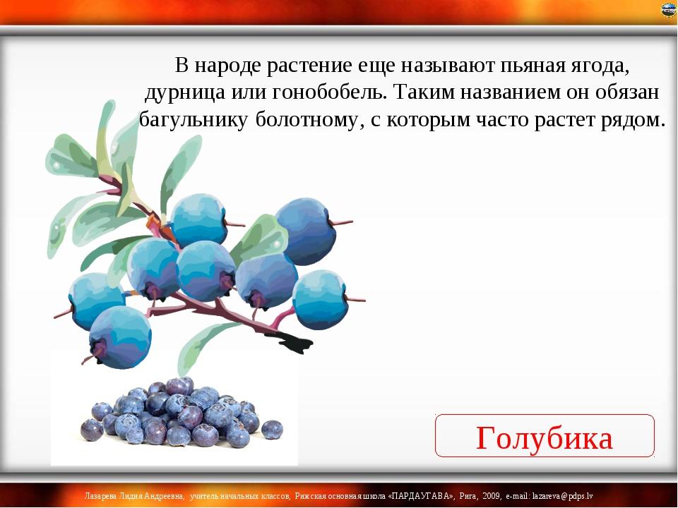 Голубика В народе растение еще называют пьяная ягода, дурница или гонобобель....