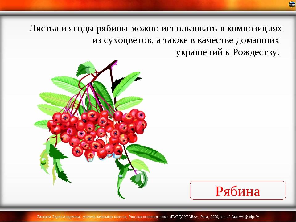 Рябина Листья и ягоды рябины можно использовать в композициях из сухоцветов,...