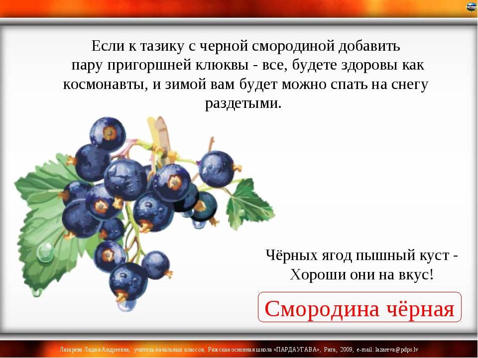 Смородина чёрная Чёрных ягод пышный куст - Хороши они на вкус! Если к тазику...