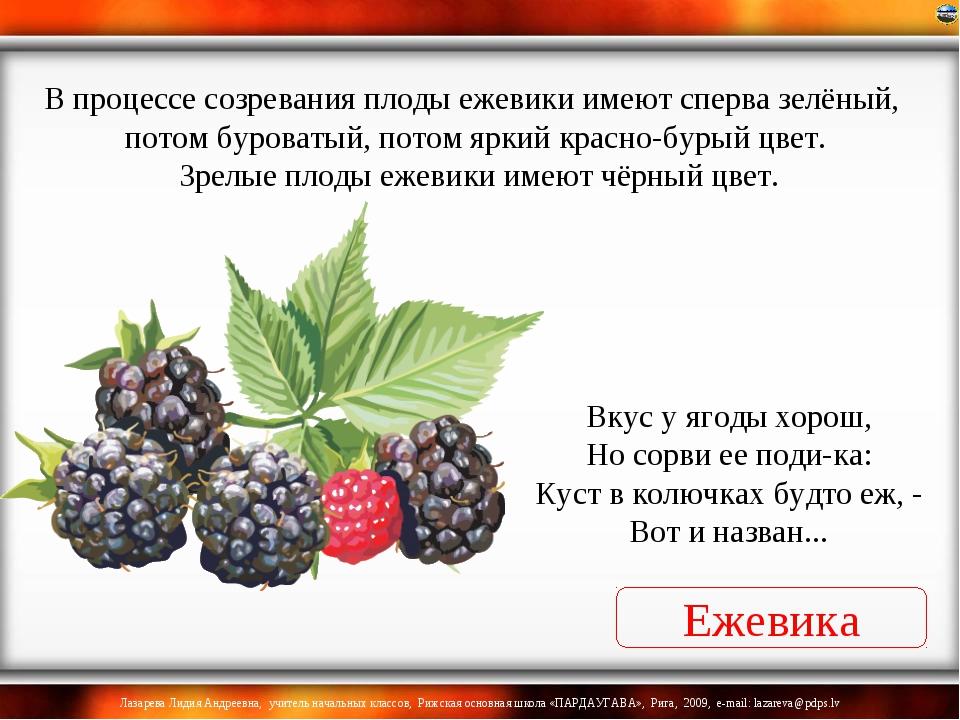 Ежевика Вкус у ягоды хорош, Но сорви ее поди-ка: Куст в колючках будто еж, -...