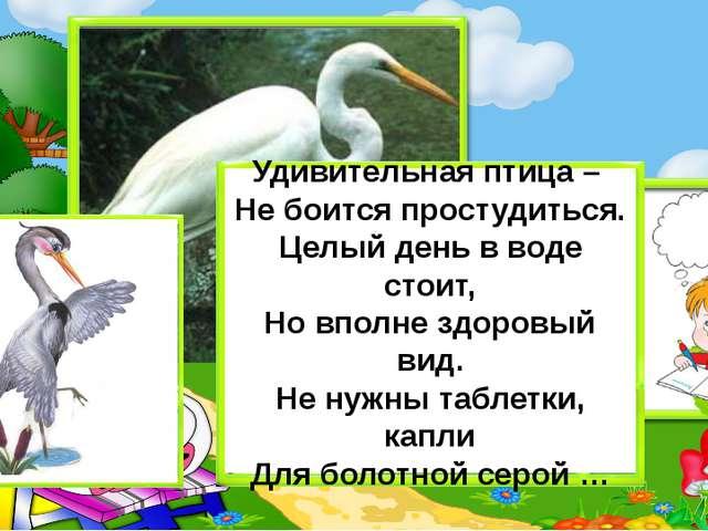 Удивительная птица – Не боится простудиться. Целый день в воде стоит, Но впол...