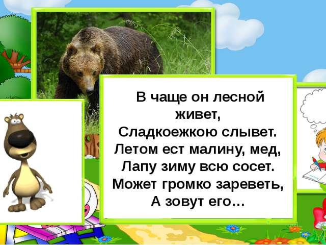 В чаще он лесной живет, Сладкоежкою слывет. Летом ест малину, мед, Лапу зиму...